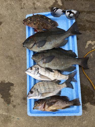 御立岬公園海釣りランド