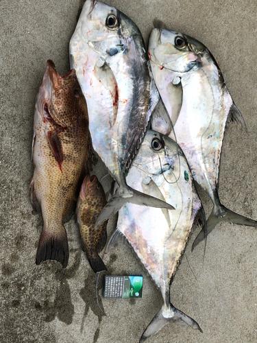 イトヒキアジの釣果