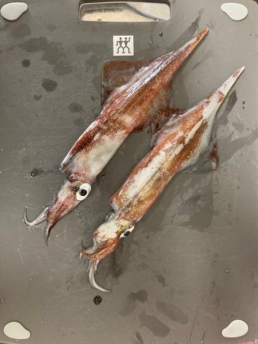 ササイカの釣果