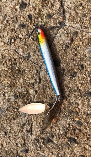 エビの釣果