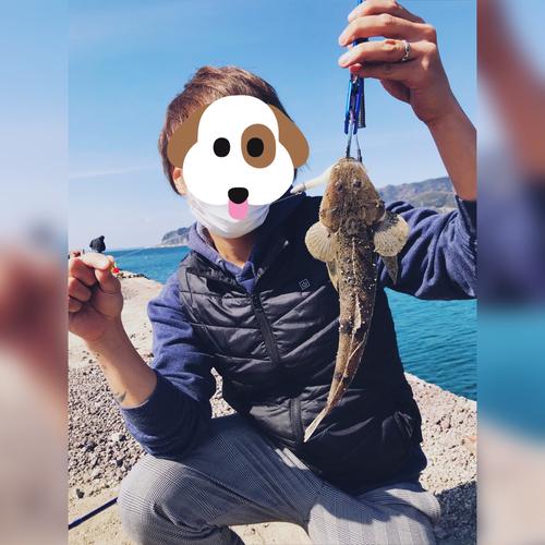 メゴチの釣果