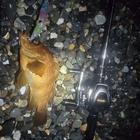 フリューゲルの釣果
