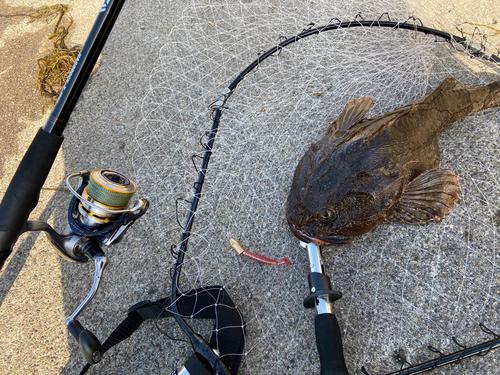 トゲカジカの釣果
