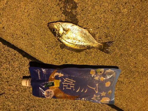 タナゴの釣果