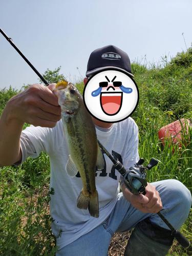 スモールマウスバスの釣果