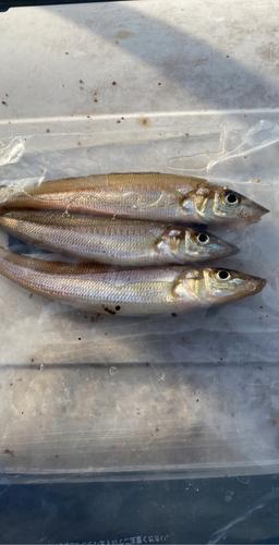 鹿島港魚釣園