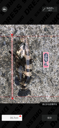 チャイロマルハタの釣果