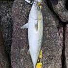 竹辺洋介の釣果