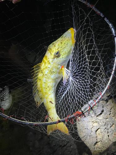 ムルーの釣果