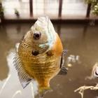 SINOBU0224の釣果