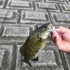 Bass anglerの釣果