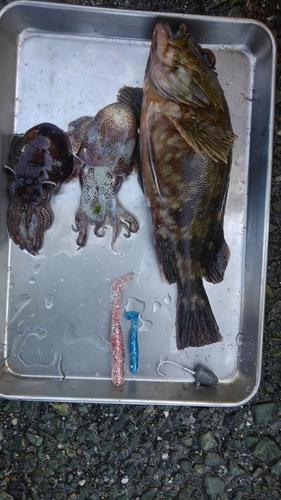 ミミイカの釣果