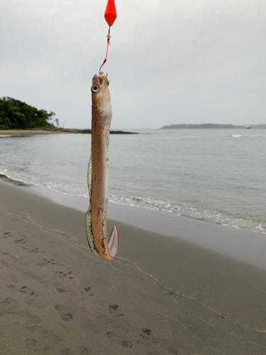 アナゴの釣果
