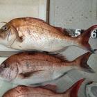 odaishiの釣果