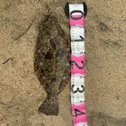釣キチ六平の釣果
