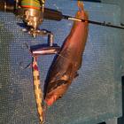 Ganyuderの釣果