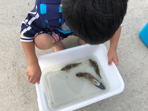 アイナメの釣果