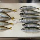 釣り 勉強中‼︎の釣果