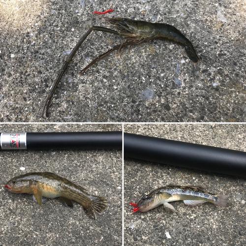 オニテナガエビの釣果
