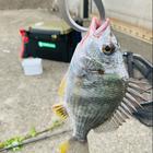 ☆釣り大好きの釣果