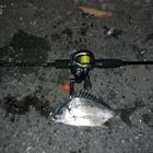 釣撃機動隊の釣果