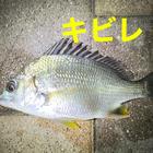 小魚専科パンケーキ〆の釣果