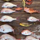ネコ釣師🔰の釣果