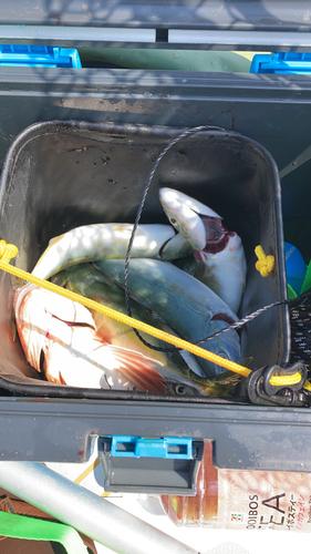 葉山釣り具センター