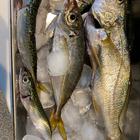 釣りが大好きの釣果