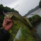 気まぐれ野池釣り師の釣果