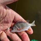 数釣り大好きの釣果