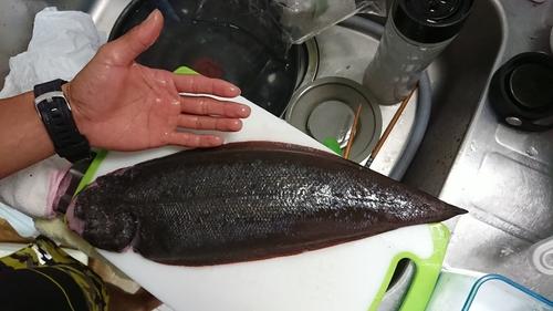 ウシノシタの釣果