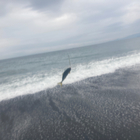 渓【大学生アングラー】の釣果