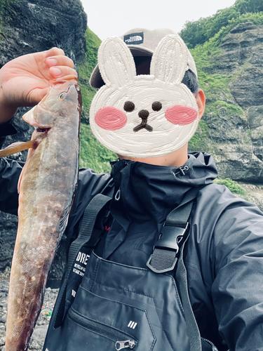 ホッケの釣果