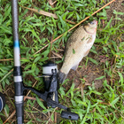 田舎の中学生🦧の釣果