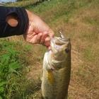 漁業組合の釣果