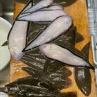 魚トリオの釣果