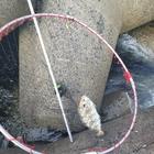 松尾武彦の釣果