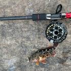 Angler Daryl の釣果