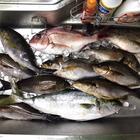 どんな季節でも釣りがしたい!の釣果