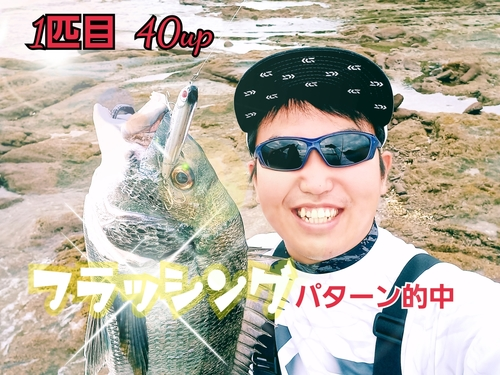 チヌの釣果