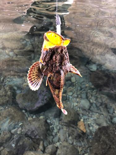 オニオコゼの釣果