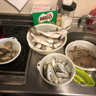 ガリ🐟料理と釣りが好きな初心者🍳の釣果