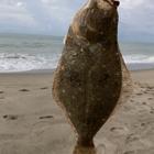 表浜の釣り素人の釣果