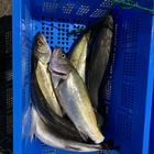 海園の釣果