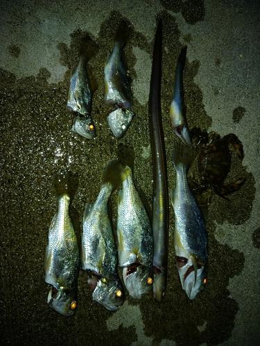 イシモチの釣果