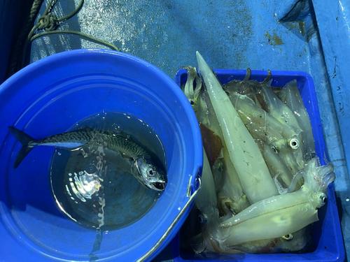 アカイカの釣果