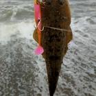 東北三浦イーグルスの釣果