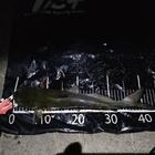 半魚鳥の次郎の釣果