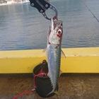 ドリビア15の釣果